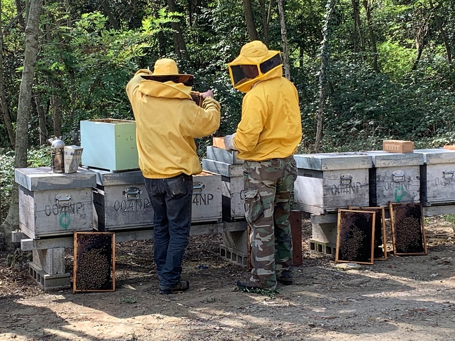 cosa fanno le api in inverno?
