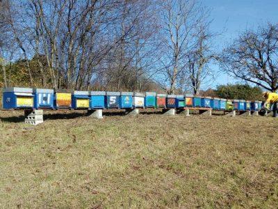 Cosa fanno gli apicoltori in inverno?